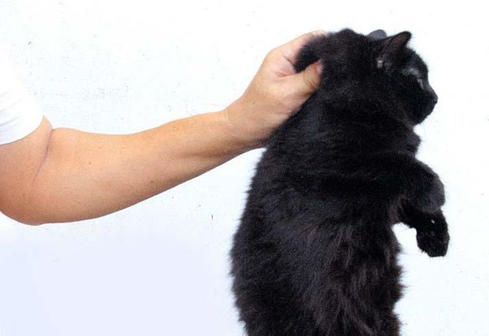 veľké prsia malé mačička pics