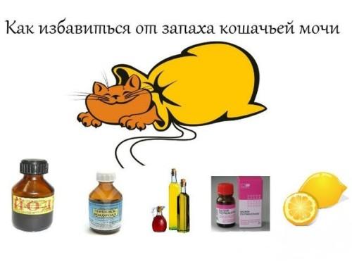 0057f6cd64ca Πώς να απαλλαγείτε από το χαλί από τη μυρωδιά των ούρων γάτα. Η ...