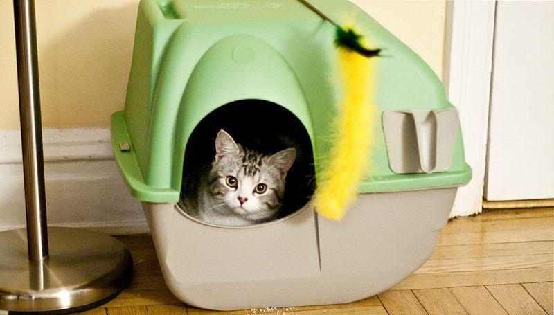 chlpaté mačička súk