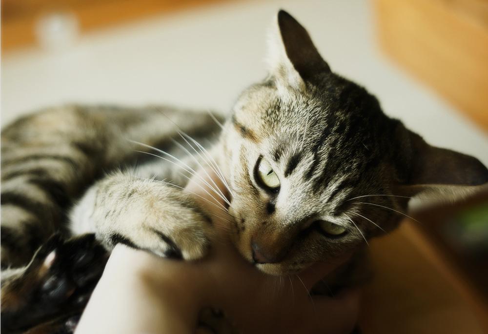 Mačky Trnava, Trnava. 3,7 K Jaime.