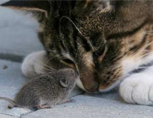 Как гуманно избавиться от мышей. Как выбрать способ борьбы перед тем как вывести мышей из частного здания? Кто нам угрожает.